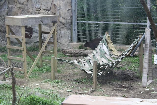 Zoo Snooze 2015 - IMG_7181.JPG