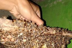 Tahukah anda manfaat madu