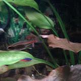 Fish - IMG_20121015_192509.jpg