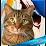 Mr.Small Shket's profile photo