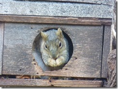 One of many squirrels