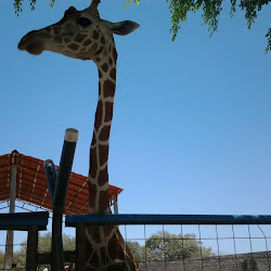 África Safari Costa Rica's profile photo