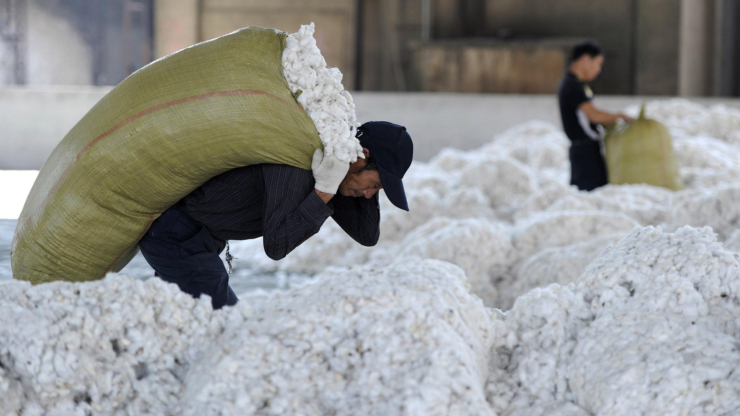 cotton1_0