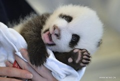 Cute-animals-1 (1)