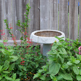 Gardening 2011 - 100_7643.JPG