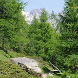La forêt d'Alp da Segl, Val Fex, 2100 m (Engadine, Grisons, CH). 14 juillet 2013. Photo : J.-M. Gayman