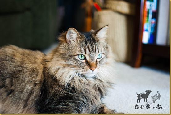 Matilda FF April 20th - 2 (©Bell Fur Zoo)