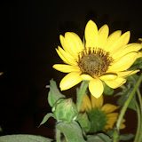 Bouquets - IMG_20120619_002204.jpg