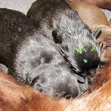 30 maj 2012 Helgas bebbsar