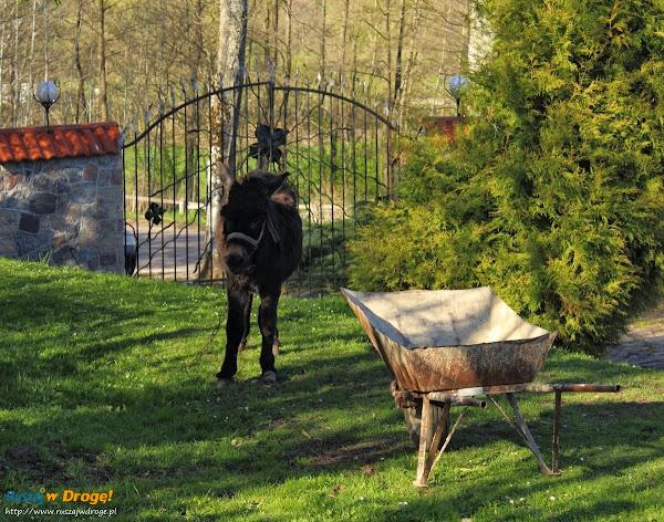 Kaszubski Park Miniatur Strysza Buda - osiołek