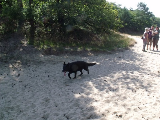 Hondenwandeling augustus (8).JPG