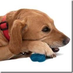 gioco per denti cane