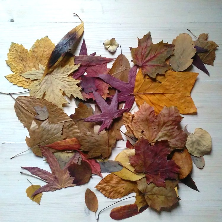 pressed autumn leaves