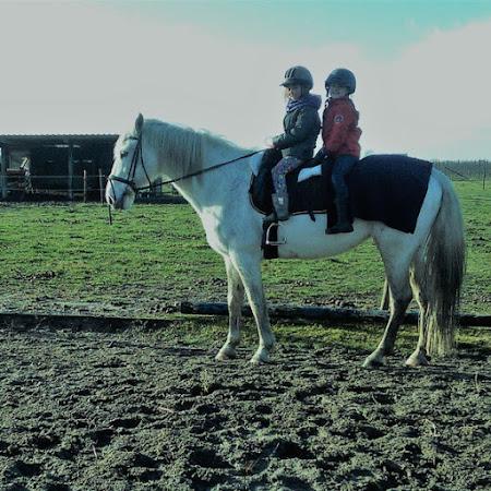 Pony wandelingen/pony kampen