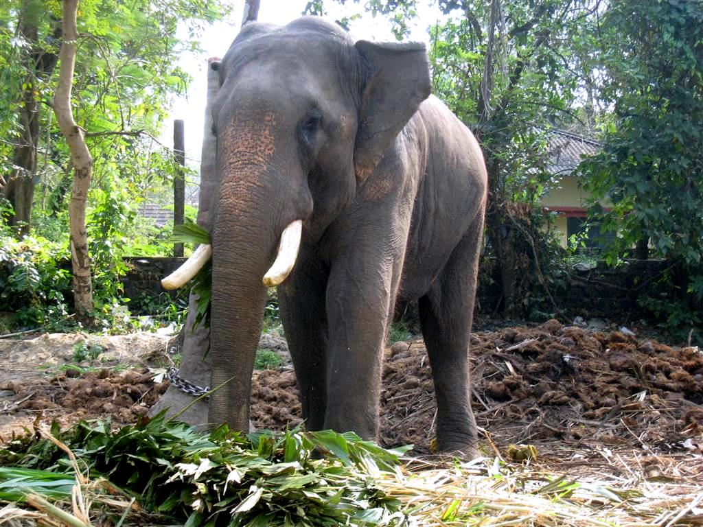 Keats The Sunshine Girl: The Elephant Sanctuary,Guruvayur ...
