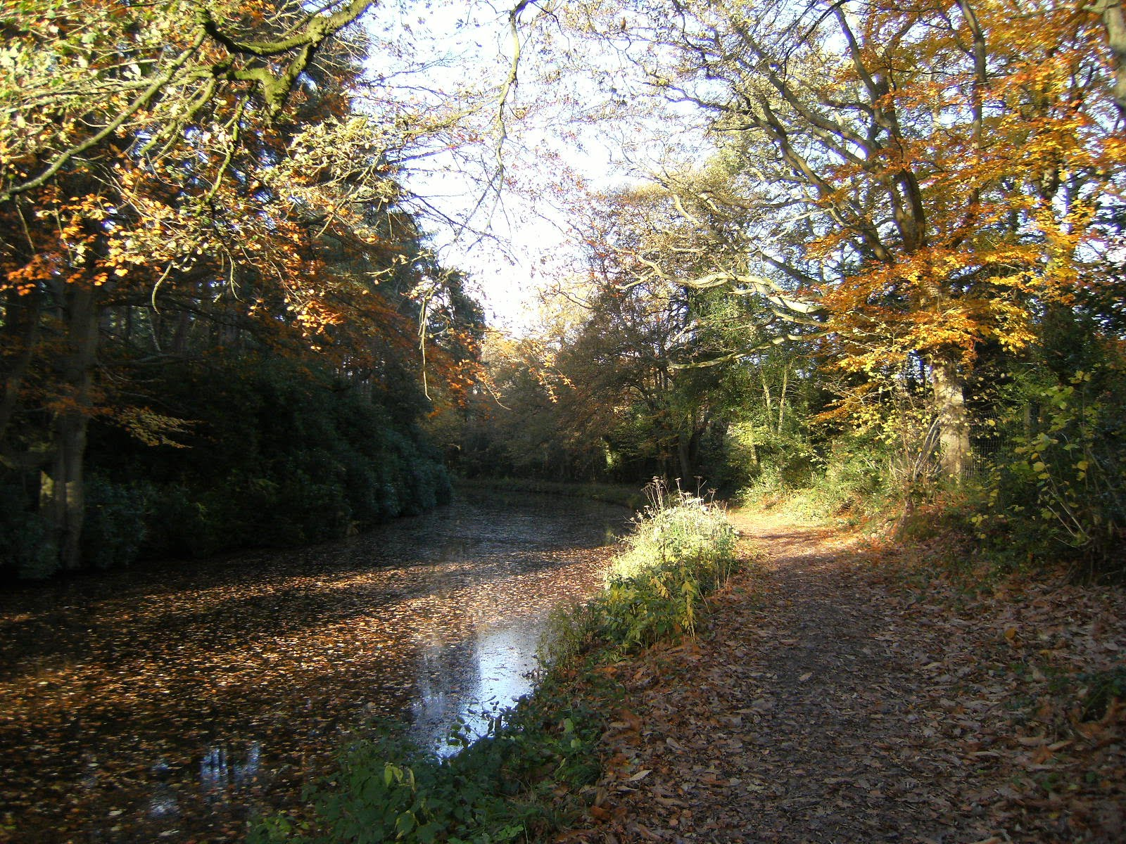 DSCF2661 Basingstoke Canal near Barley Mow Bridge