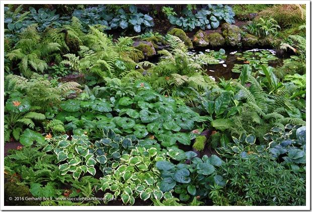 160906_Butchart_Gardens_0065