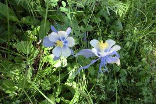 https://lh3.googleusercontent.com/-I-r1mharqVE/TjcmHycAu5I/AAAAAAAABUM/TcDh4lWB33M/flowers.jpg