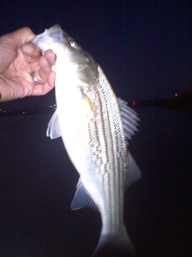 gravelly point striped bass