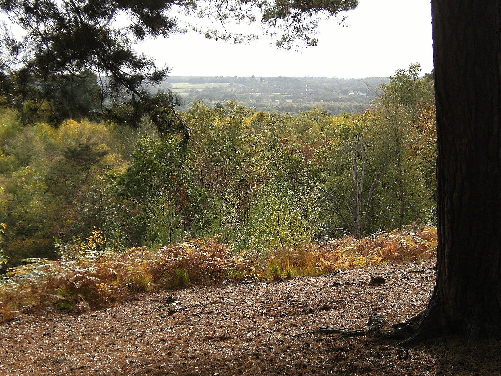 DSCF2125 Viewpoint on Finchampstead Ridges