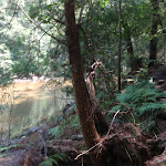 Cockle Creek on Gibbergong track (118642)