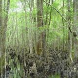 4 Holes Swamp 016.jpg