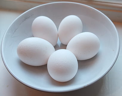 White Ameraucana chicken egg color