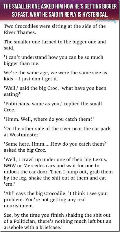 crodcodile conversation