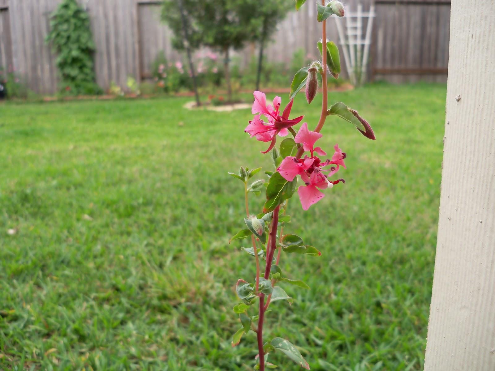 Gardening 2010, Part Two - 101_2432.JPG
