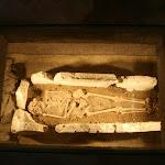 Tour Saint-Rieul : sarcophage et squelette (moulage)