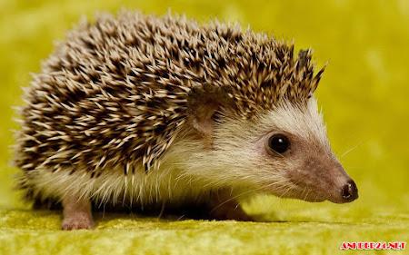 Top 40 hình nền động vật dễ thương kute hài hước