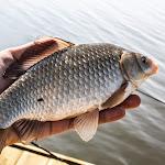 20140404_Fishing_Prylbychi_023.jpg