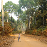 Cidinha Rissi dans la forêt amazonienne entre Itauba et Marcelândia (35 km au SE de Colider), au nord du Mato Grosso (Brésil), 6 septembre 2010. Cette forêt demeure préservée parce qu'elle est productrice de noix brésilienne ou noix d'Amazonie (castanha-do-Pará, en portugais), noix de l'arbre Bertholletia excelsa (Lecythidaceae). Photo : Cidinha Rissi