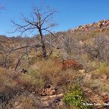 11-09-13 Wichita Mountains Wildlife Refuge - IMGP0421.JPG
