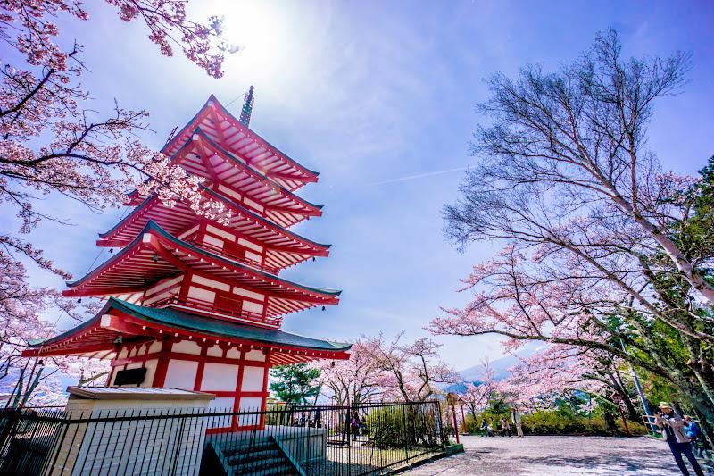 新倉富士浅間神社 桜 写真12