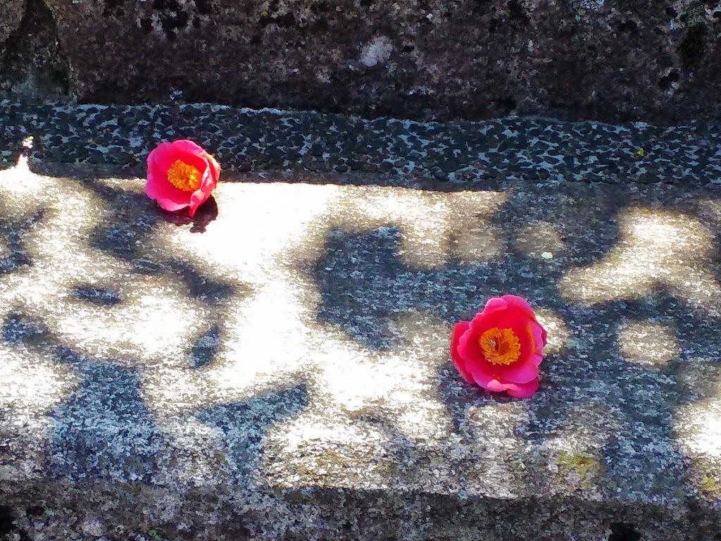 tsubaki-flower