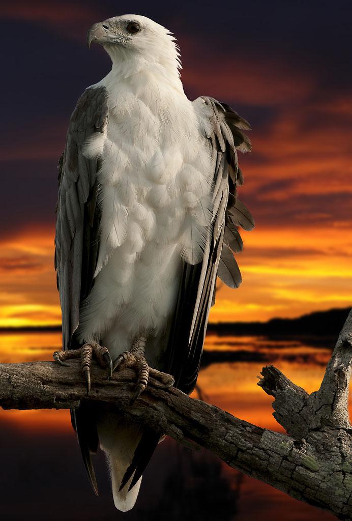 Gambar Burung Comel