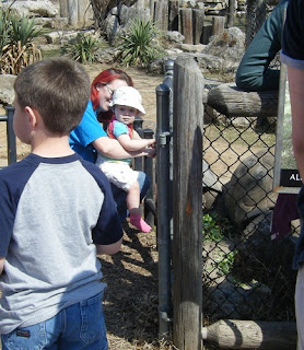 Tulsa Zoo ~ Aldabra Tortoises