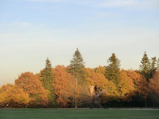 CIMG7597 Late autumn sunshine, Lullingstone Park