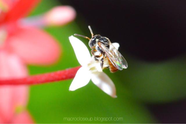 Macro photo - Bug