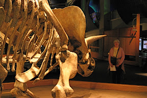 Mom facing down a triceratops