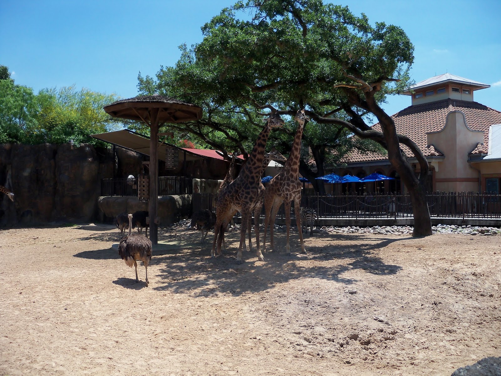 Houston Zoo - 116_8550.JPG