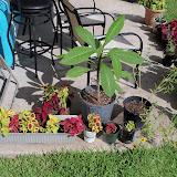 Gardening 2010, Part Three - 101_5031.JPG