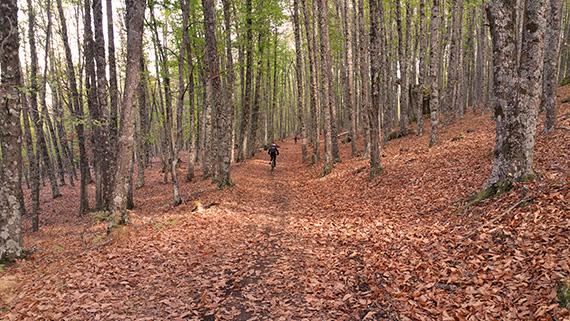 Ruta por el Castañar del Tiemblo - Sábado 7 de noviembre 2015 ¡Apúntate!