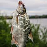 20140603_Fishing_BasivKut_001.jpg