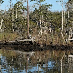 Fowl Marsh from Boat Feb3 2013 042