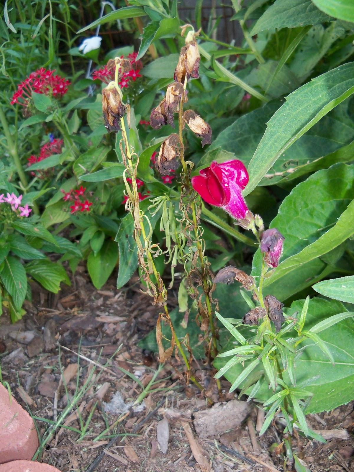 Gardening 2010, Part Three - 101_4320.JPG