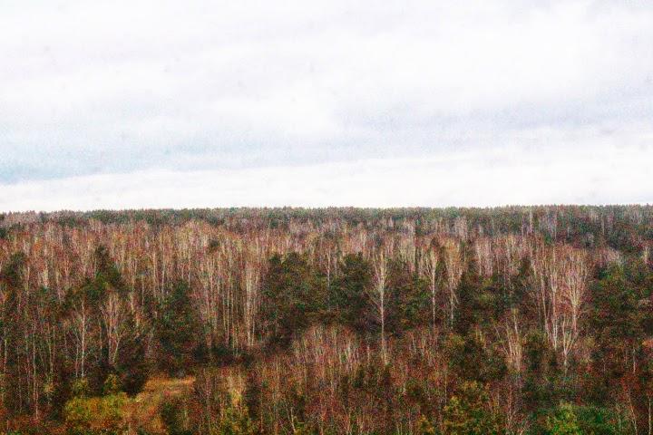 Trans Siberian forest train scenery
