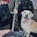 Na Capital: cão farejador encontra arma usada por traficantes, em Mangabeira