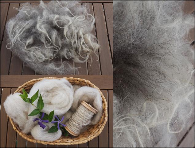 Schafwolle als rohes Vlies, Kardenband, Einzelfaden auf der Spule und in Nahaufnahme.